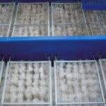 biologicheskaja zagruzka10 150x150 Барабанное Сито