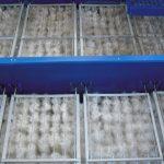 biologicheskaja zagruzka10 150x150 Барабанные решётки
